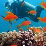 We offer you great experience scuba diving to see the spectacular underwater world with our dive masters