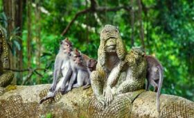 adi ubud tour-professional tour guide and speaking English driver-bali tour guide- interesting place in Bali-ubud monkey forest - ubud monkey forest tour - adi ubud tour