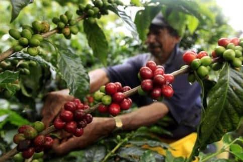 Bali Tour - Special Coffee Plantation -Adi Ubud Tour
